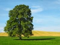 Immer mehr Verbraucher legen Wert auf Nachhaltigkeit und Ökologie - auch bei Versicherungen und Geldanlagen.