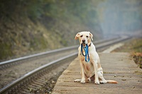 Hund sitzt an einem verlassenen Zugbahnstei und hält eine Leine in der Schnauze.