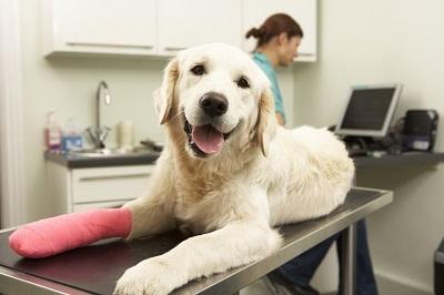 Wird ein Hund durch einen anderen Hund verletzt, muss der verantwortliche Hundehalter Schadensersatz leisten. Der materielle Wert des Tieres ist für eine Erstattung der Tierarztkosten nicht maßgeblich