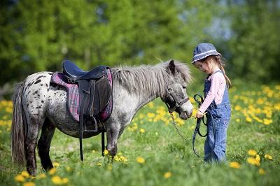 Urteil: Pferde müssen neuerdings mit einem Transponder gekennzeichnet werden. Ein Schenkelbrand reicht nicht aus und ist daher eigentlich unnötig.