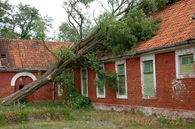 Entwurzelter Baum an Haus