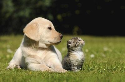 Hunde und Katze liegen nebeneinander auf der Wiese und blicken nach links.