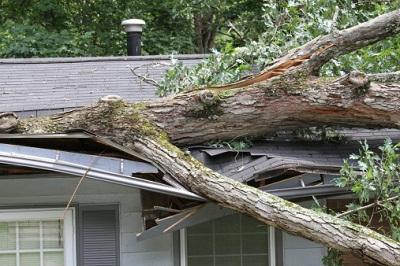 Baum in Hausdach