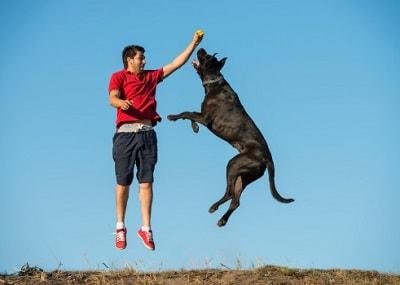 Ein Mann und ein Hund springen in die Luft.