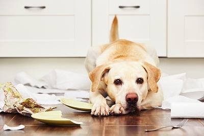 Hunde scherben Boden