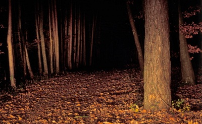 Im Wald ist ein Hund einem Mann vor das Rad gelaufen.