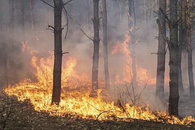 Die Waldbrände in Kanada haben den Ölpreis steigen lassen.