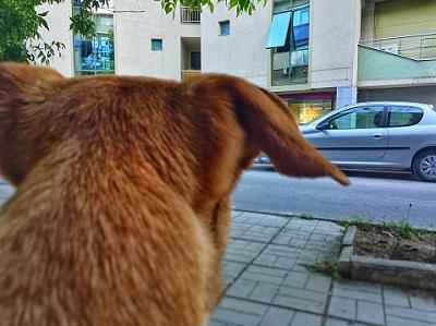 Hundekopf von hinten und Straße