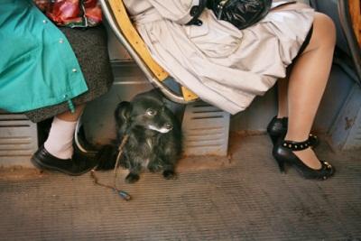 Hund in Straßenbahn