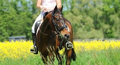 Pferdehalter haften auch bei einer Reitbeteiligung.