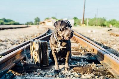 Hund mit Koffer auf Gleis