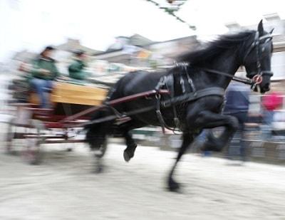 Ein Pferd geht bei einer Kutschfahrt durch