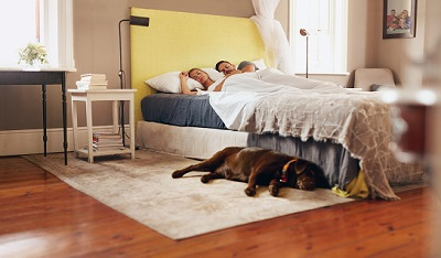 Hund im Schlafzimmer neben Bett