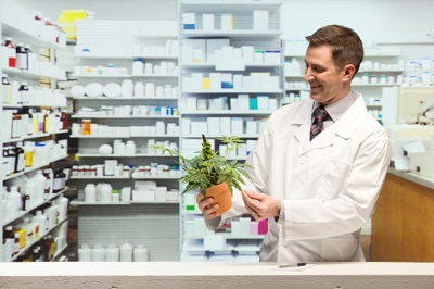 Arzt mit Hanfpflanze in Apotheke