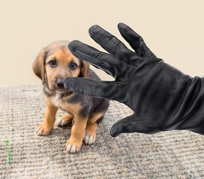 Hund und Handschuh von Einbrecher