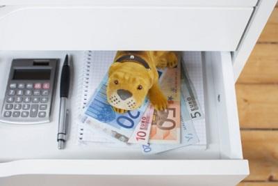 Stoffhund in Schublade auf Geldscheinen