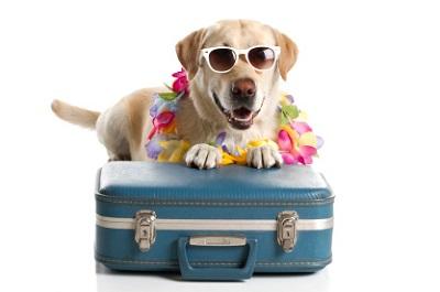 Hund mit Sonnenbrille und Koffer