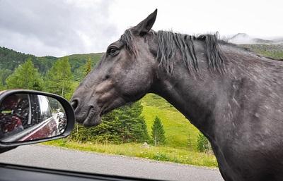 Pferd neben Seitenspiegel eines Autos