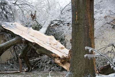 Umgestürzter Baum im Winter