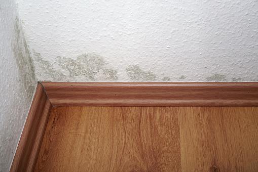 Schimmelpilze an der Wand einer Wohnung.