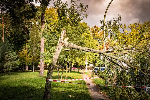 Ein durch Sturm umgeknickter Baum blockiert einen Gehweg.