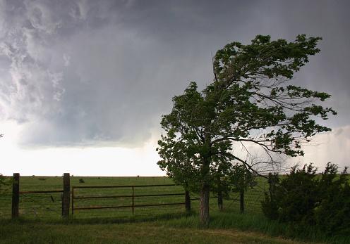 Ein Baum im Vordergrund biegt sich unter heftigem Wind, im Hintergrund sind Felder zu sehen.