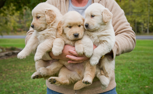 drei Hundewelpen