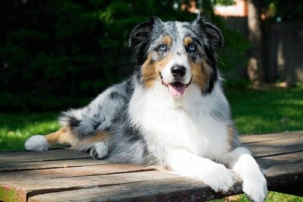Best Dog Breeds For An Active Young Adult