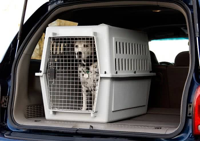 hund im auto transportieren hundehaftpflicht ratgeber. Black Bedroom Furniture Sets. Home Design Ideas