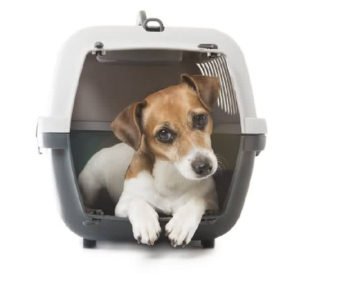 hund im zug oder bus mitnehmen bahnfahren mit hund check24. Black Bedroom Furniture Sets. Home Design Ideas